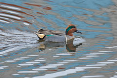 Green Teal Reflections Royalty Free Stock Photo