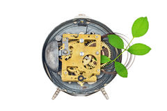 Green technology. Inside the clockworks and plant Stock Images