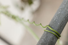 Green tendril structure Stock Photography