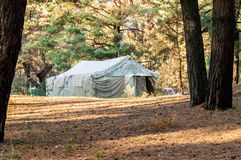 Green tent, camping, camping, woods Stock Photography