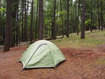 Green Tent in a Forest Stock Photos