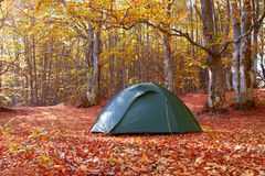 Green tent in the forest Royalty Free Stock Photography