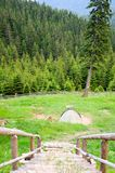 Green tent in the mountain autumn forest Royalty Free Stock Image