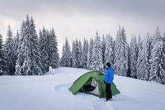 Green tent in winter mountains. Green tent and tourist against the backdrop of snowy pine tree forest. Amazing winter landscape. Tourists camp in high mountains stock photos