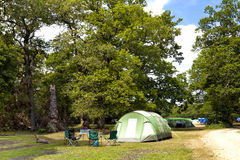 Green tents in camping site in the forest Stock Image