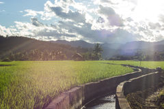 The green terace field in malanoi maehongson thailand Royalty Free Stock Photo