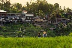 Rice fields and houses. Ubud, Bali, Indonesia. Stock Photography