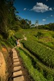 Rice fields road. Ubud, Bali, Indonesia. Stock Photography