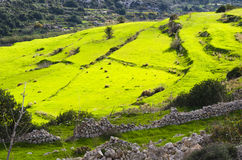 Green terraced meadows Stock Photography