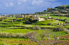 Green terraced meadows, Malta Stock Photo