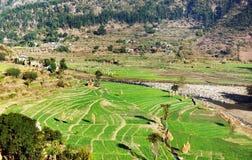 Green terraced paddy field in nepal Stock Photos