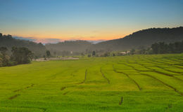 Free Green Terraced Rice Field Royalty Free Stock Image - 44492696