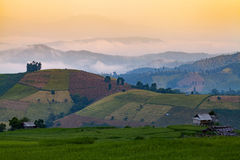 Green Terraced Rice Field at Ban Pa Bong Peay in Chiangmai, Thai Royalty Free Stock Photo