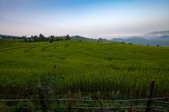 Green Terraced Rice Field at Ban Pa Bong Peay in Chiangmai, Thai Stock Photography
