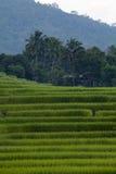 Green Terraced Rice Field at Ban Pa Bong Peay in Chiangmai, Thai Royalty Free Stock Photo