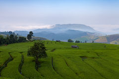 Green Terraced Rice Field at Ban Pa Bong Peay in Chiangmai, Thai Royalty Free Stock Images