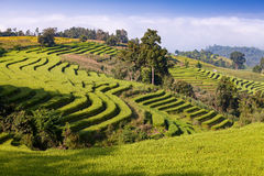 Green Terraced Rice Field at Ban Pa Bong Peay in Chiangmai, Thai Stock Images