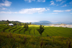 Green Terraced Rice Field at Ban Pa Bong Peay in Chiangmai Royalty Free Stock Photography