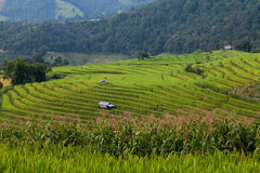 Green Terraced Rice Field at Ban Pa Bong Peay in Chiangmai Stock Photo