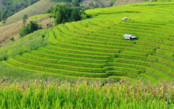 Green Terraced Rice Field. Beautiful rice paddy field in Thailand Royalty Free Stock Photo