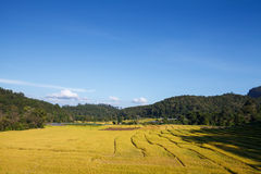 Green terraced rice field and blue sky Stock Photo