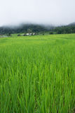 Green Terraced Rice Field in Chiang mai, Thailand Royalty Free Stock Photos