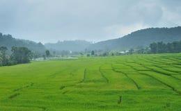 Green Terraced Rice Field Stock Photo
