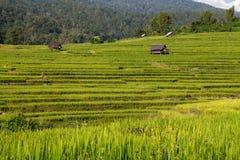 Green Terraced Rice Field in Chiangmai, Thailand Royalty Free Stock Photo