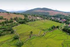 Green Terraced Rice Field Royalty Free Stock Photos