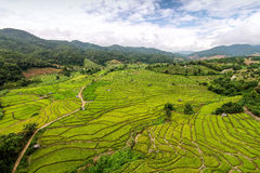 Green Terraced Rice Field Stock Images