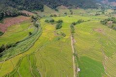 Green Terraced Rice Field Stock Photos
