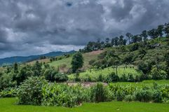 Green Terraced Rice Field in Chiangmai, Thailand Royalty Free Stock Images