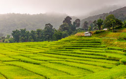 Green Terraced Rice Field in Chiangmai, Thailand Royalty Free Stock Photography