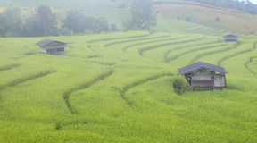 Green Terraced Rice Field with fog on the mountain in Chiangmai Royalty Free Stock Images