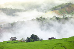 Green Terraced Rice Field with fog on the mountain in Chiangmai Stock Images