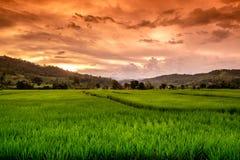 Green Terraced Rice Royalty Free Stock Photo