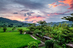 Green Terraced Rice Royalty Free Stock Photography