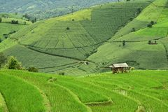Green terraced rice field at Pa Bong Piang village. In Mae Cham, Chiangmai, Thailand Stock Photography