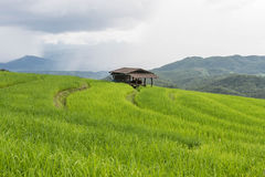 Green Terraced Rice Field in Pa bong Pieng , Royalty Free Stock Image