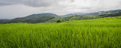 Green Terraced Rice Field in Pa bong Pieng Stock Photography