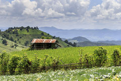 Green Terraced Rice Field. In Pa Pong Pieng , Mae Chaem, Chiang Mai, Thailand Stock Photos