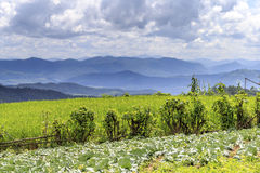Green Terraced Rice Field. In Pa Pong Pieng , Mae Chaem, Chiang Mai, Thailand Stock Images