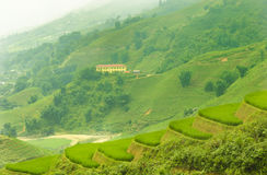 Green Terraced Rice Field in Sapa, Lao Cai, Northwest Viet Nam Stock Photo