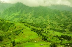 Green Terraced Rice Field in Sapa, Lao Cai, Northwest Viet Nam Stock Photography