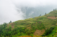 Green Terraced Rice Field in Sapa, Vietnam Stock Photo