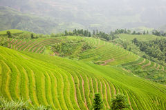 Green  terraces Royalty Free Stock Photography