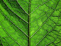 Green texture. Texture Royalty Free Stock Photos
