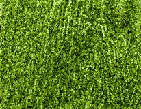 Green texture Stock Photos