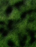 Green Texture Stock Image
