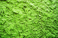 Green texture background wall Stock Image